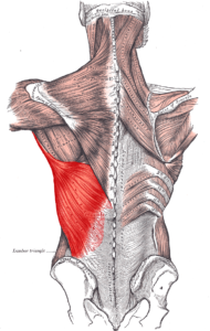 Your lats are involved in more movements than you might think.