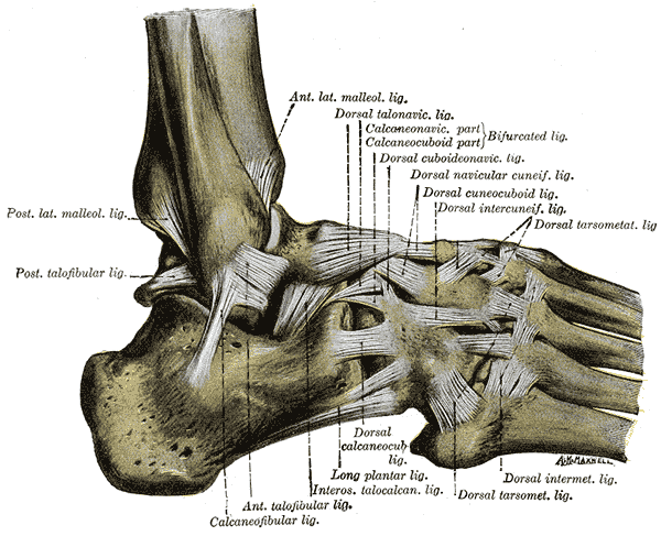 Ligaments on the lateral aspect are affected in an inversion ankle sprain.