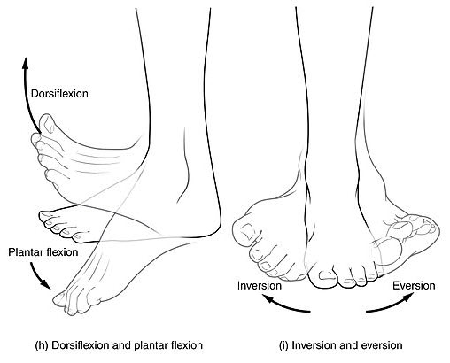 Ankle and foot mobility is needed for good gait mechanics