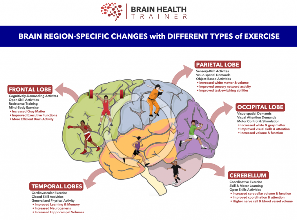 [Description: Brain Region-Specific Changes with Different Types of Exercises Picture shows different lobes of brain and how they affect the human body]]